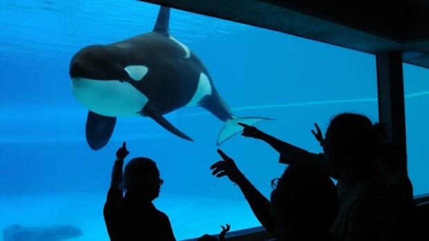 orca-kiska-alone-marineland-jo-anne-mcarthur-e1434958260676